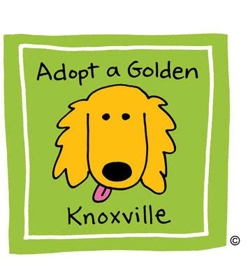 golden retriever rescue knoxville tn adopt a golden knoxville golden retriever rescue organization serving tennessee