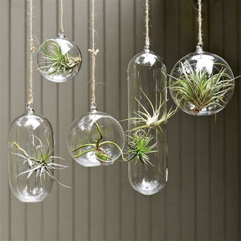 indoor hanging planters shane powers hanging glass collection contemporary indoor pots and planters by west elm