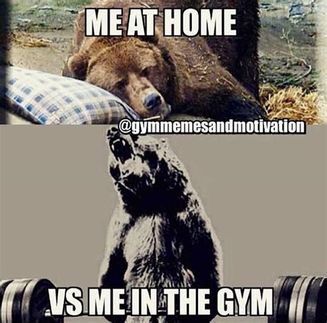 Sloth Fitness Meme - 1241 best images about gym funny on pinterest gymrat