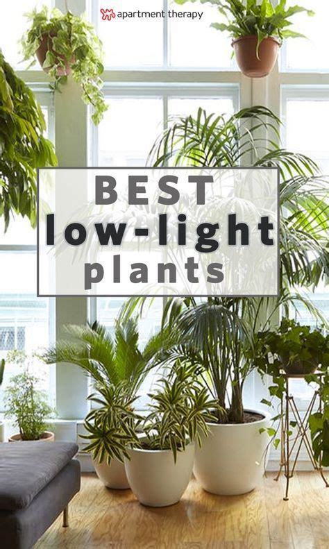 houseplants for low light conditions 25 best ideas about indoor plant decor on house plants plants indoor and indoor