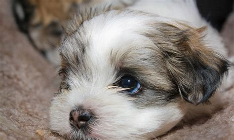 best puppies to own 10 best dogs to own