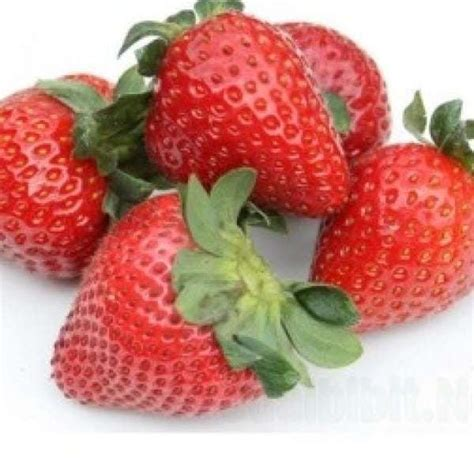 Jual Bibit Pohon Strawberry jual bibit unggul tanaman strawberry california bibit