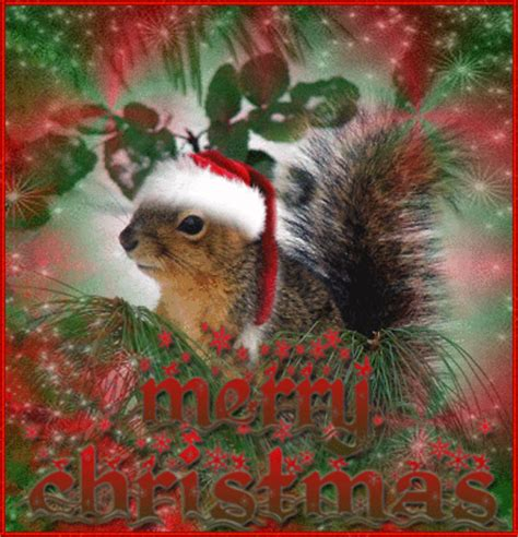 squirrel squirrels christmas winter picture  blingeecom