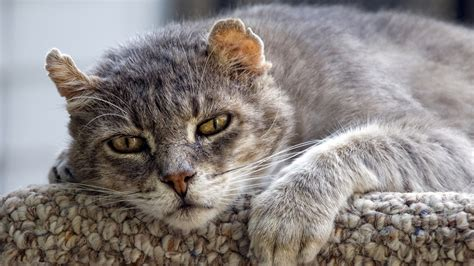 5 tips that will keep your cat going in the old age all