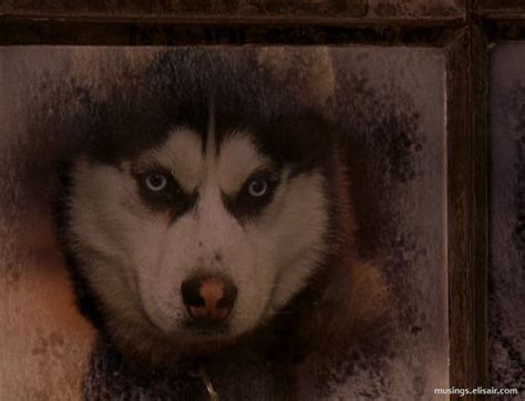 cuba gooding jr sled dog movie snow dogs get ready for mush hour musings from us