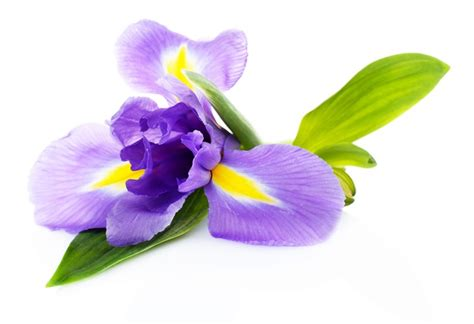 i fiori e il loro significato come scegliere i fiori eccone 12 e il loro significato