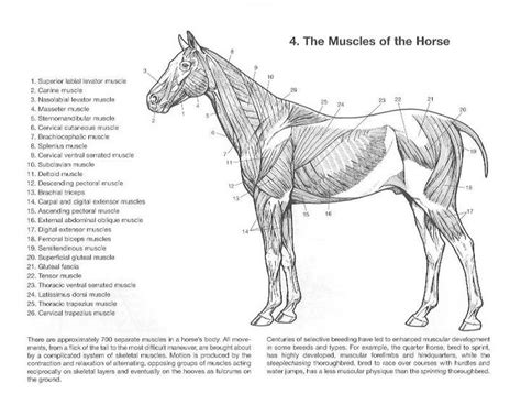 anatomy colouring book veterinary 35 best anatomy images on anatomy