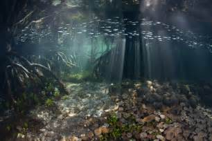 Marine Aquascaping Underwater Mangrove Google Zoeken Mermaids And Water