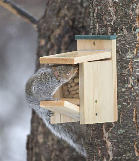 duncraft com duncraft jack in the box squirrel feeder