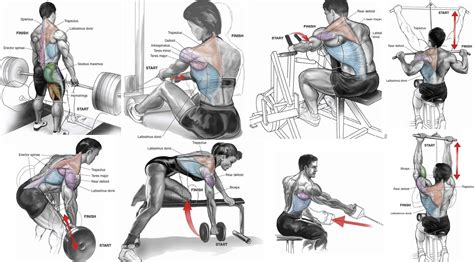the best back workout for mass all bodybuilding
