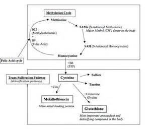 Glutathione n acetyl cysteine amino acid supplements