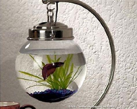 aquarium boule d 233 finition illustr 233 e