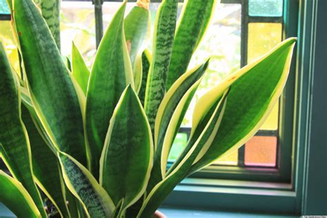 easy to care for indoor plants 6 houseplants that are low maintenance and easy to care