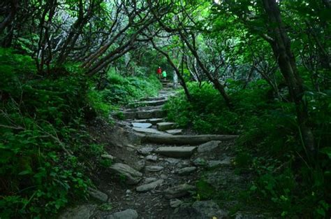 trail picture of craggy gardens asheville tripadvisor