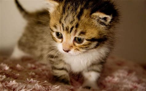 imagenes tiernas gatitos bebes 10 fotos de gatitos bebes tiernos en hd imagenes frases