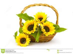 Flower Vase Lights Sunflower Bouquet In A Basket Royalty Free Stock Photos