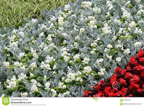 bed in summer flower summer bed in a garden stock photo image 56694041