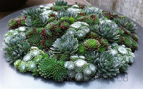 planters for succulents succulents of similar shape in a round planter decoist