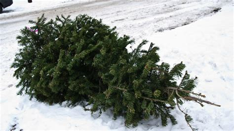 how to dispose of your christmas tree in mississauga