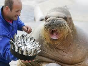 walrus birthday cake i love a walrus pinterest birthday cakes birthdays and cakes