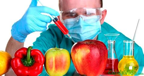 es  alimento transgenico cuida tu vida
