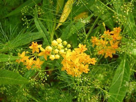 immagini fiori tropicali fiori tropicali immagini per desktop 10094