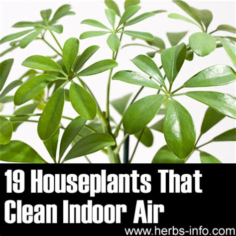 best houseplants for clean air nasa houseplants clean air pics about space