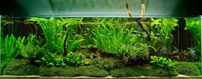 fish tank aquascape designs an aquascape with aquatic plants and moss live planted