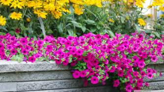 New Beautiful Flowers - download moril beautiful flowers wallpaper 1920x1080