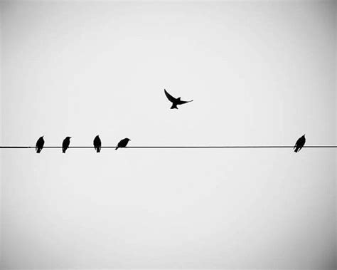 bird photography nature birds on a wire black by