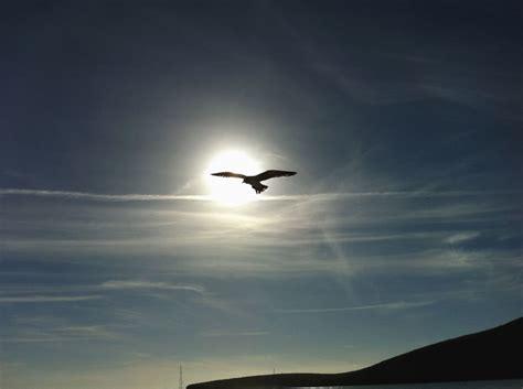 image libre oiseau soleil ciel montagne animal ciel