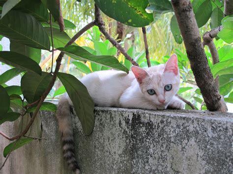 Manja World Dosen Kucing mazuriah s world anak kucing aku