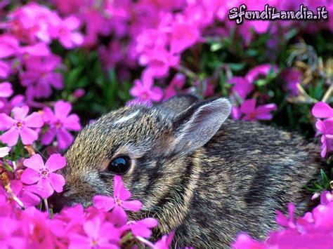 sfondilandia fiori sfondilandia it sfondo gratis di tra i fiori per desktop