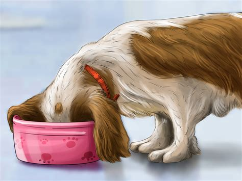 how to stop diarrhea in dogs 4 ways to treat diarrhea and constipation in dogs and cats
