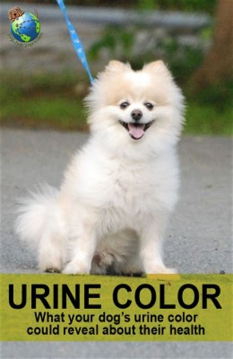 dog urine color why is my dog's urine yellow or brown