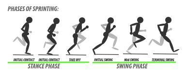 swing phase of walking the dreaded hamstring strain
