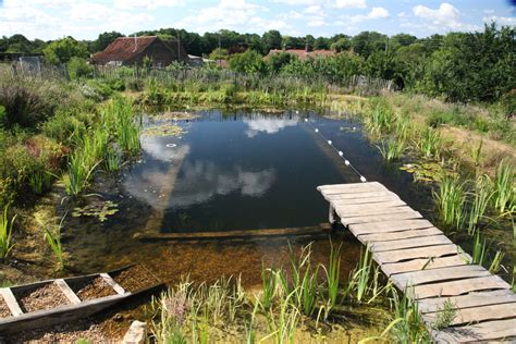 natural swimming pool byzantineflowers organic natural swimming pools