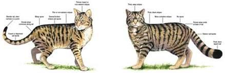 the scottish wildcat trees for
