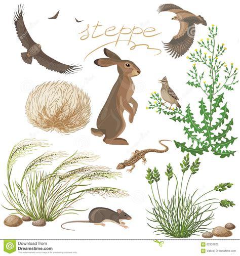 imagenes de animales y plantas de mexico plantas y animales de la estepa fijados ilustraci 243 n del