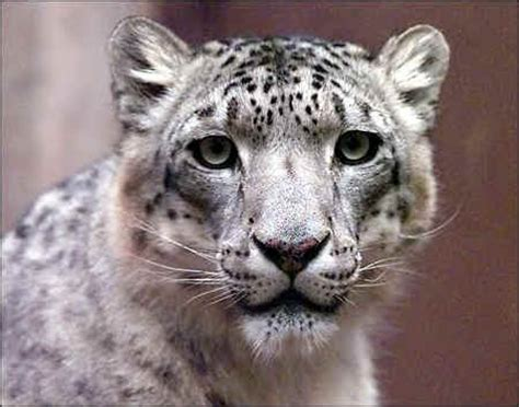 seed notes now available for the latest snow leopard build