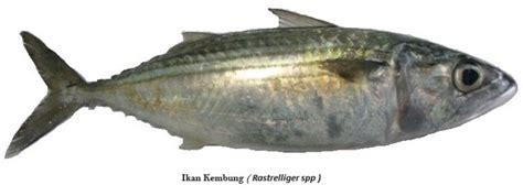 download mp3 gigi ikan laut nama dan jenis ikan laut yang ada di kepulauan seribu