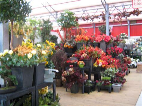 tanaman hias tanaman hias