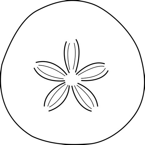 coloring page sand dollar clipart sea urchin cliparts co