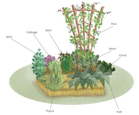 Straw Bale Garden Layout One Straw Bale At A Time Quarto Homes
