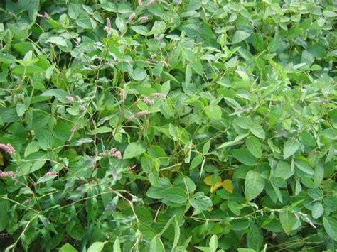 chambre d agriculture de l oise du soja 224 36 q ha dans l oise