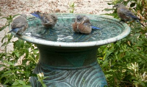 dirty bird bird baths home