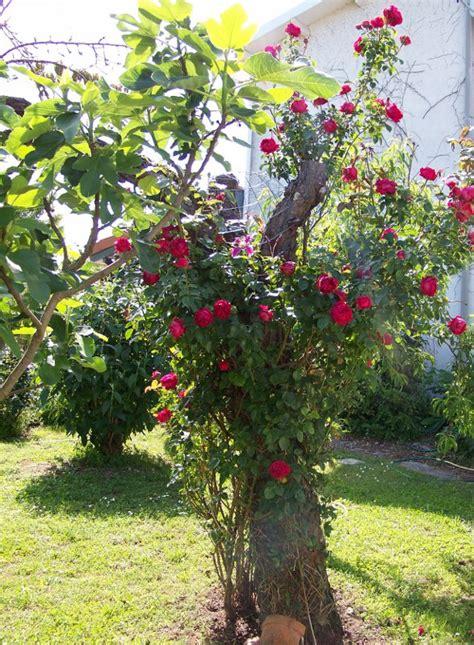 les jardins de david les plantes grimpantes