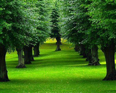 imagenes arboles otoño descargar 2560x2048 arboles cesped naturalrza fondo de