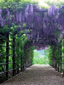 Best Vines For Pergola by Gallery For Gt Wisteria Vine Trellis