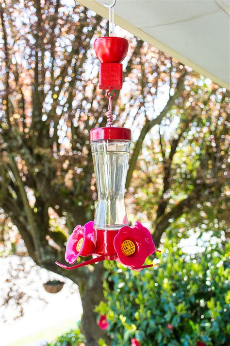 hummingbird feeder ant moat